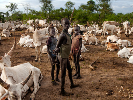 8 killed in Central Equatoria cattle clashes