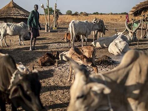 Mundari cattle herders trigger emergency security meetings