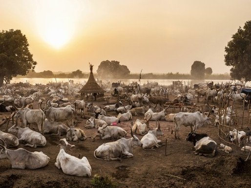 Bangolo residents raise concerns over cattle keepers
