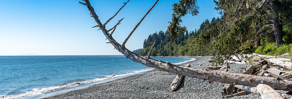 Leaning tree over beach