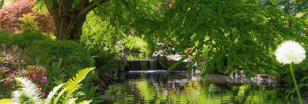Quiet stream in park