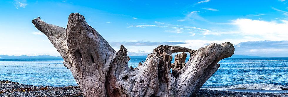 Drift wood on Sombrio Beach