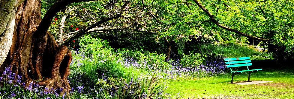 Beacon Hill Park bench