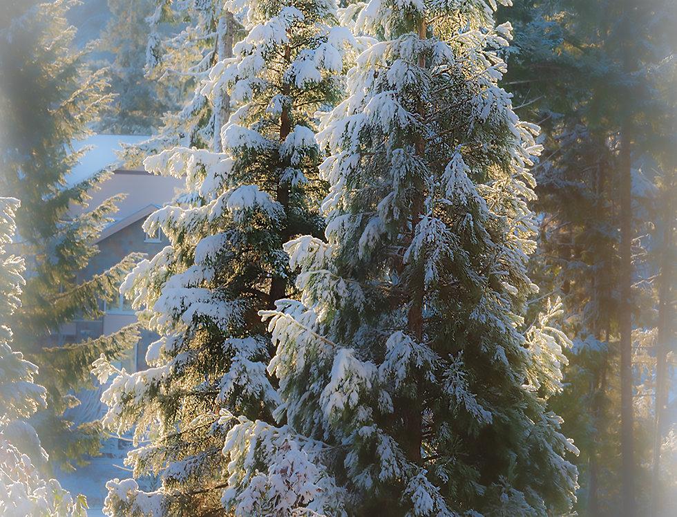 Snowy Trees -Happy Holidays
