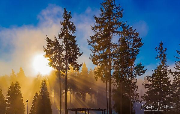 Fog in the trees wide.jpg