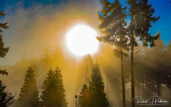 Fog through the trees.jpg