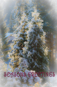 Christmas Snowy trees Seasons greetings.