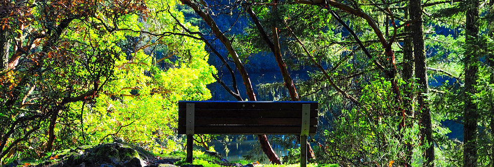 Empty park bench at lake