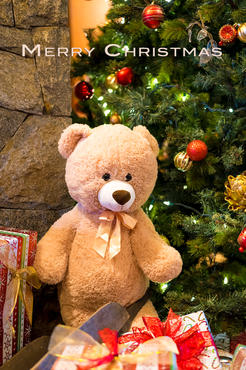 Bear in gift boxes.jpg