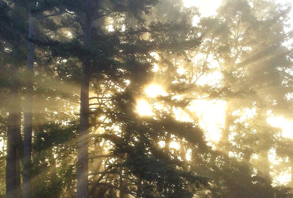 Sun rays through fog