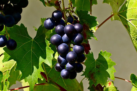 grapes-4813140_1920.jpg