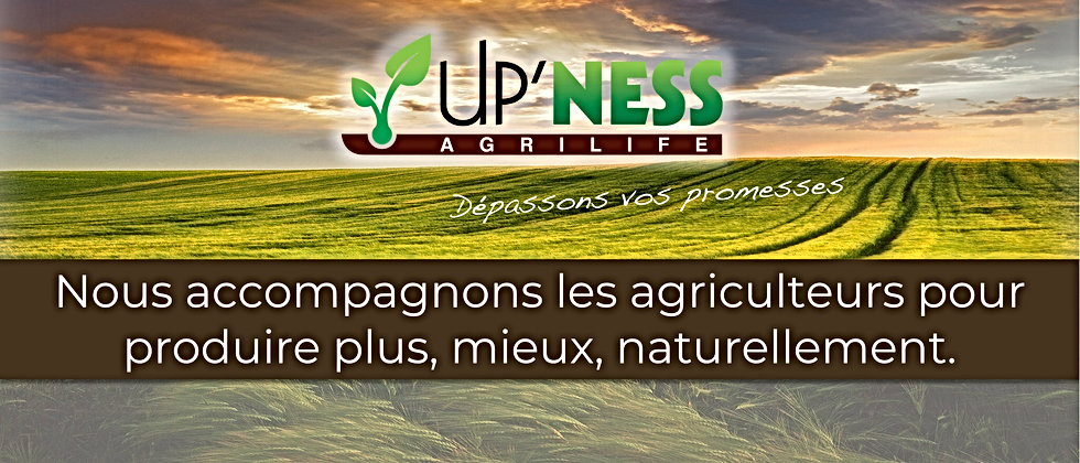 Upness pour Site Internet upness.fr.001.