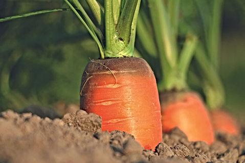 Carrotte-CMJN.jpg