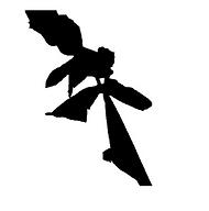 letterhead-header_edited.png