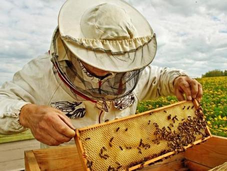 Выпускников коррекционных школ обучают пчеловодству в СКО