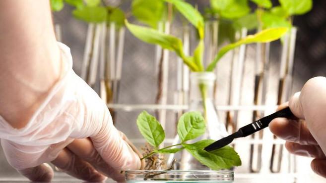 Развивать аграрную науку поручено Минсельхозу
