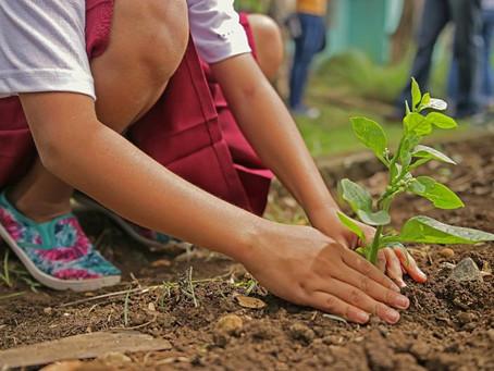 Министрлер мен әкімдер оқушылармен бірге ағаш отырғызады
