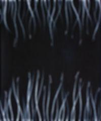 Reeds On Black