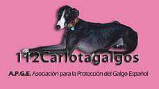 112 Carlota Galgos.png
