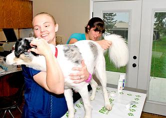 Wellness Exams | Bourbon Veterinary Hospital