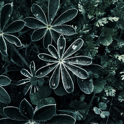 How to Protect Your Plants from Spring Freeze