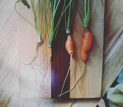 First carrot harvest.  They aren't doing so well..