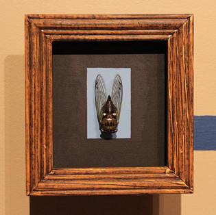 cicada (detail), brotes de cuentos, mfa thesis show, florida state university, 2015.