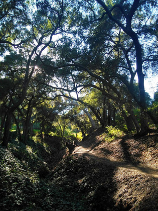 canopied hidden trail in La Cañada Flintridge, California, 2018.
