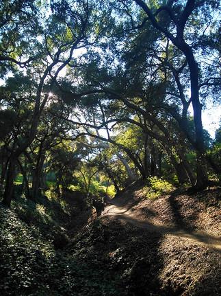 canopied hidden trail in La Cañada Flintridge, California, 2018.