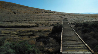 antelope valley california poppy reserve, 2017.