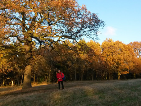 Autumn in London - The perfect leafy walks