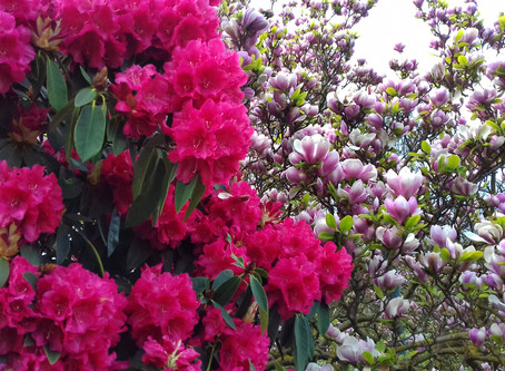 Blooming Marvellous -The 6 best places to see spring flowers in London
