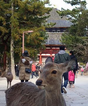 Deer and Todaiji.jpeg