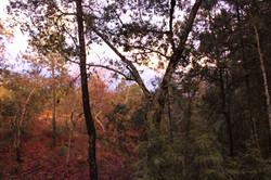 Romanza del Bosque