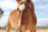 Mustang, Flint McCoy