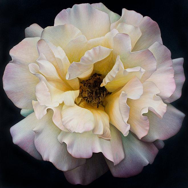 Flower Series #25.jpg