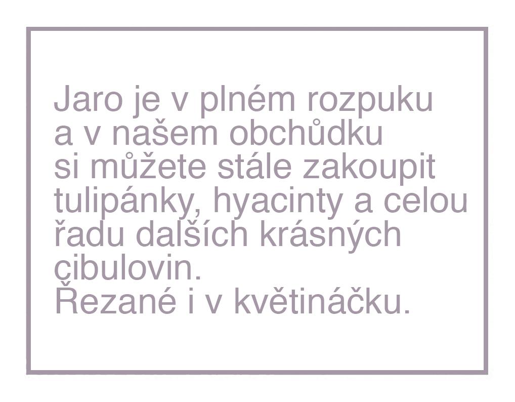 cibulovinky IV.jpg