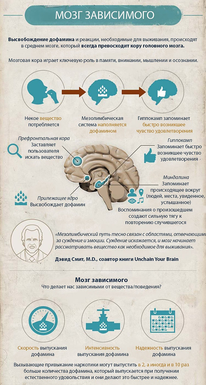 Пластичность мозга и зависимости инфографика.jpg