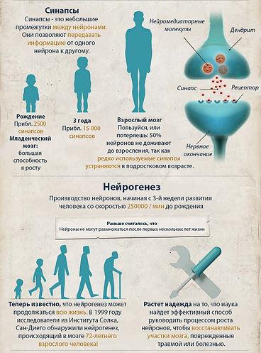инфографика пластичность мозга 2.jpg