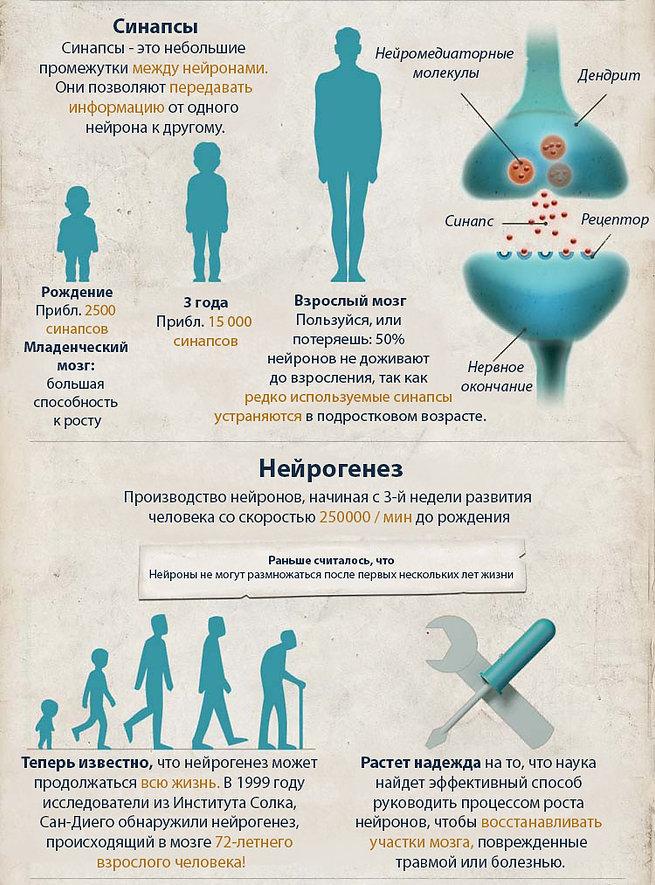 Нейропластичность мозга инфографика.jpg