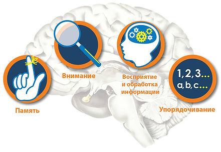 Основные когнитивные функции.jpg