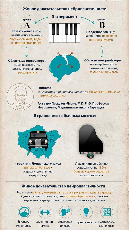 Доказательство пластичности мозга инфографика.jpg