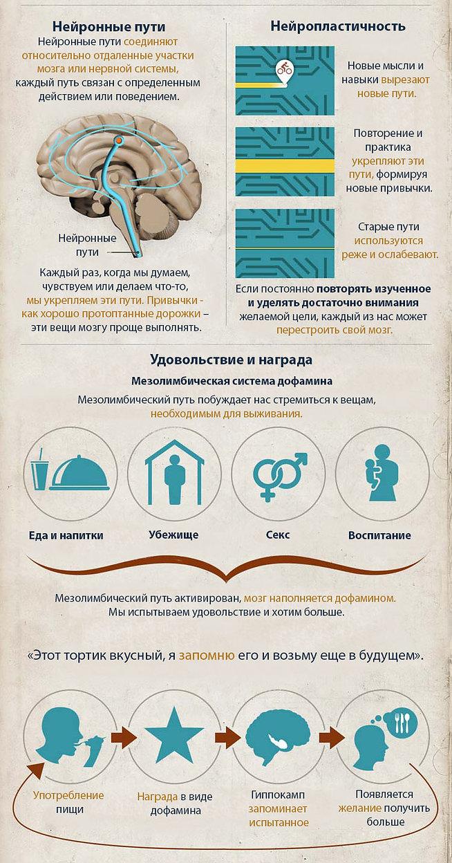 Пластичность мозга инфографика.jpg