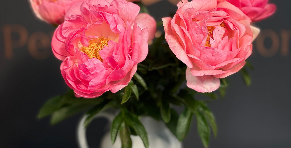 Wraps of Coral Peonies
