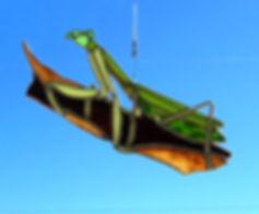 P Mantis nopatina.jpg