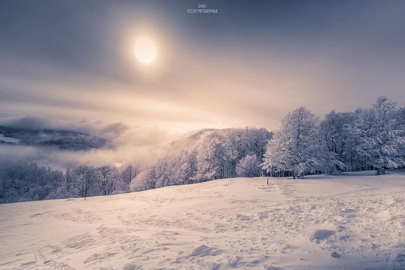 Snowy Trees // Edition Papier - 20x30
