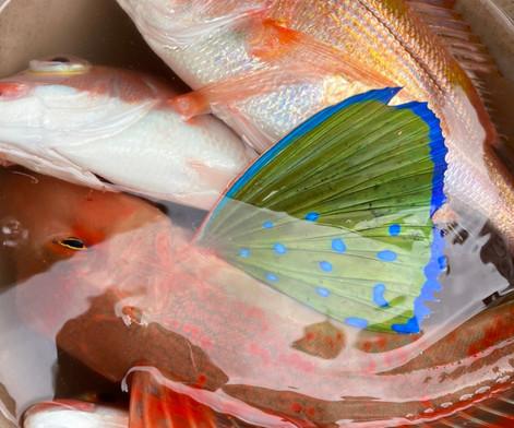 12月網代船釣りツアー_201224_16.jpg