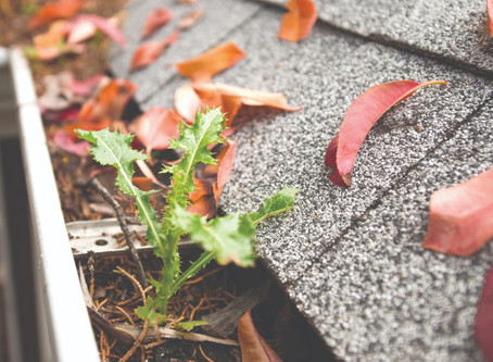 Are your gutters clogged?