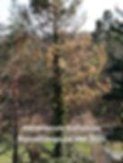 IMG-20200606-WA0011_edited.jpg