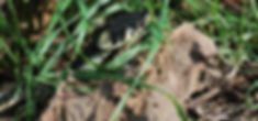 Seltener Bewohner an der Blühwiese in unserem Garten (15.10.2019)